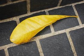yellow4-5